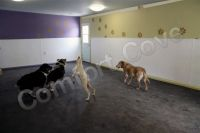 Pet Boarding Room Heating by Comfort Cove - Off White